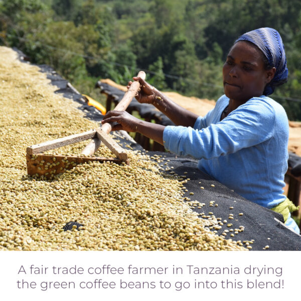Fair trade coffee farmer in Tanzania drying green coffee beans for Level Ground Rift Valley coffee blend (Rosette Fair Trade)