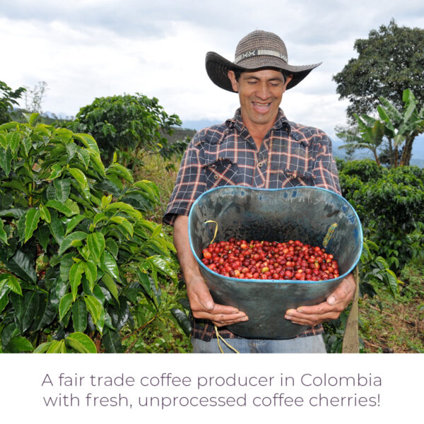Fair trade coffee producer in Colombia with fresh cherries for Level Ground French Roast (Rosette Fair Trade)