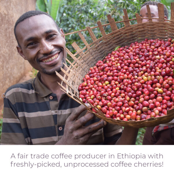 Fair trade coffee producer with unprocessed fresh cherries for Level Ground Ethiopia coffee (Rosette Fair Trade)