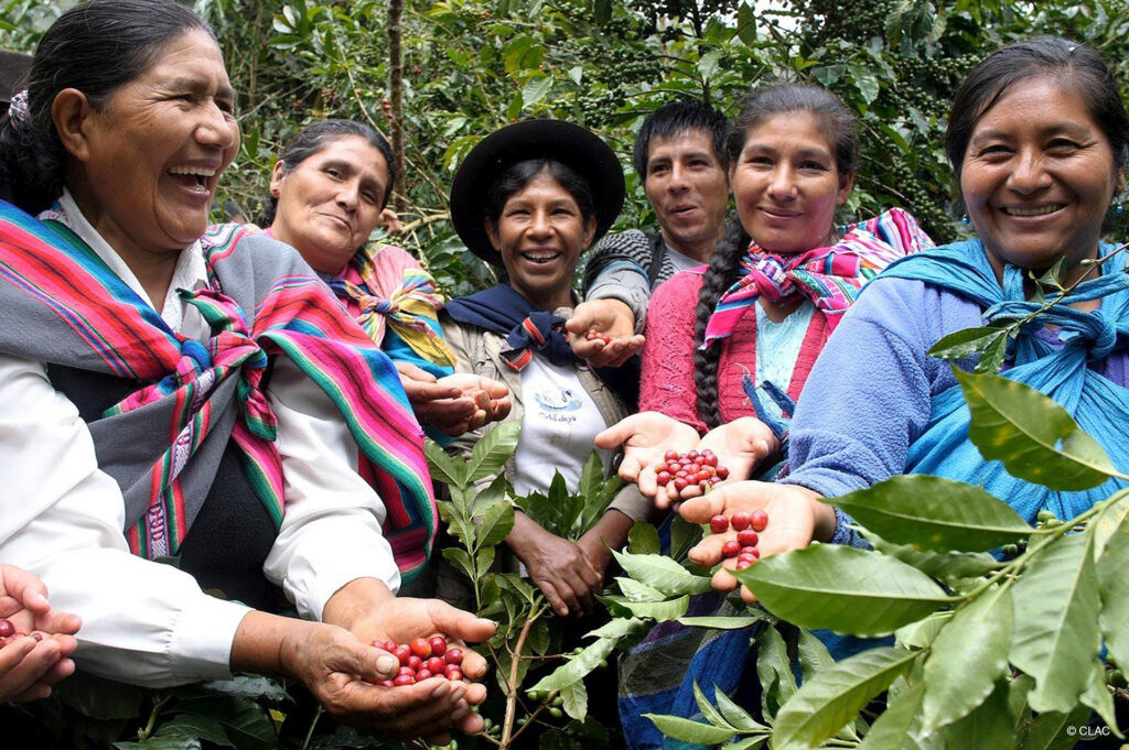 Fair trade coffee cherries and the smiling women who grew them on the Rosette Network