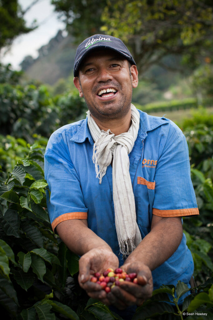 Fair trade coffee cherries in the producer hands on the Rosette Network