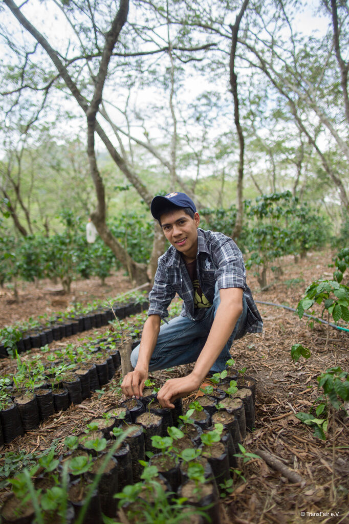Fair trade coffee plants with producer Mario on the Rosette Network