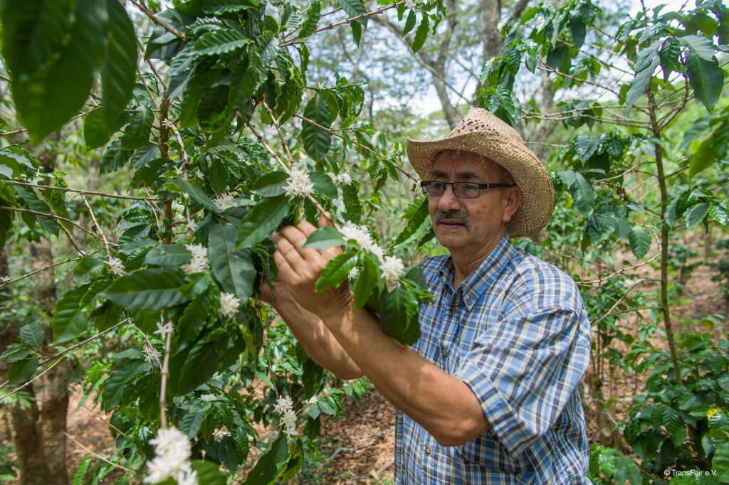 Fair trade coffee trees with producer Mario Henrique on the Rosette Network