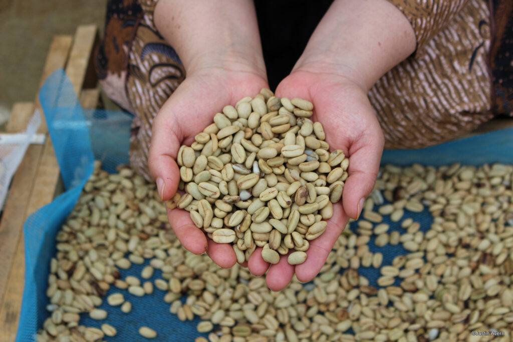 Fair trade green coffee beans in the hands of the producer on the Rosette Network