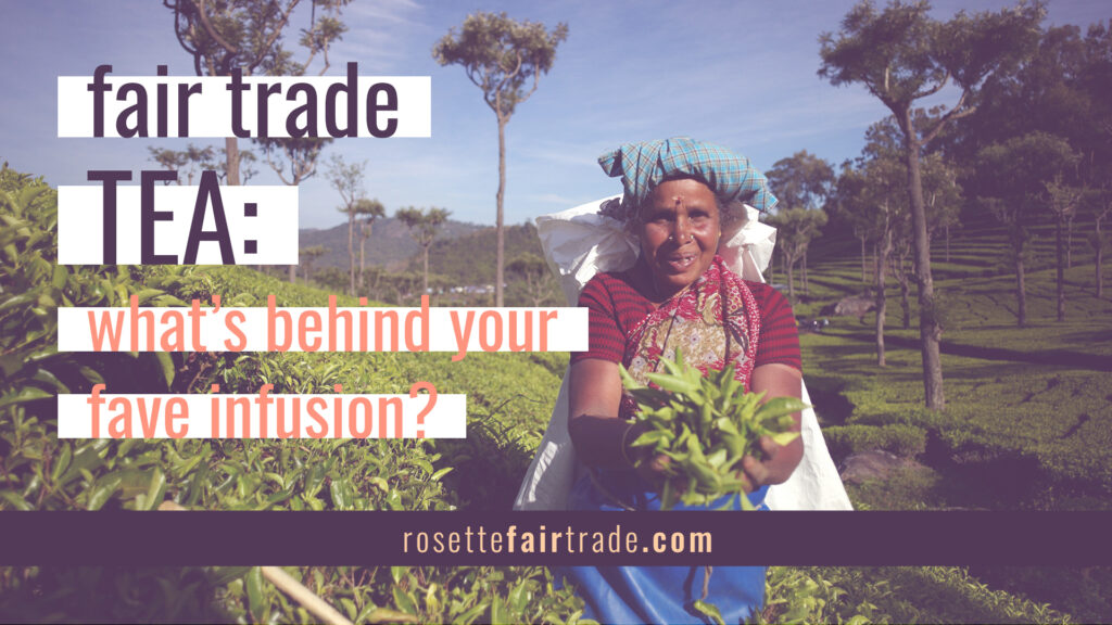 Fair trade tea - how is it made on the Rosette Network (featured)